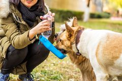 Dog in the park drinking from the drinking bowl Stock Photography