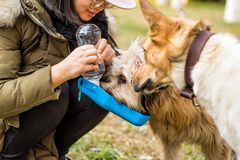 Dog in the park drinking from the drinking bowl Stock Photos