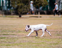 Dog in a park Royalty Free Stock Image