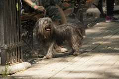 Dog in the park Royalty Free Stock Photography