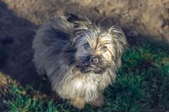 Pretty puppy in the park royalty free stock images