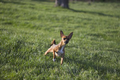 Dog in the park. Manual focus lens shot of a cute little doggie in the park Stock Images