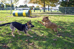 Dog Park Play Royalty Free Stock Photos