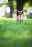 Dog in the park Stock Images