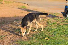 Dog in the park Royalty Free Stock Images