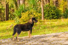 Dog in park. Stray dog standing on the pavement in the park Stock Photography