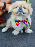 Dog participates at LGBT Pride Parade in New York City. LGBT pride march takes place during pride week and is the culmination of week long festivities Stock Photo
