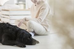 Dog participating in therapy. Dog participating in special pet therapy with a cancer patient Stock Images