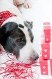 Dog at party Royalty Free Stock Photos