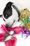 Dog after party Royalty Free Stock Photo
