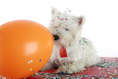 Dog party Stock Photo