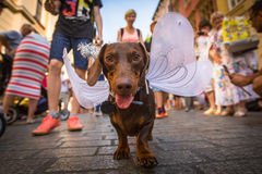 Dog party in the annual 22nd Dachshund Parade Royalty Free Stock Image