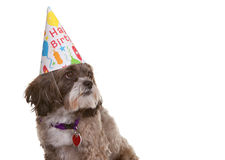 Dog with Party Hat Royalty Free Stock Photos