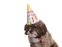 Dog with Party Hat Stock Image