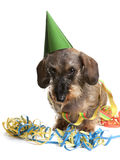 Dog with party hat and party streamers Royalty Free Stock Photography