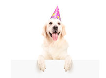 Dog with party hat posing on a panel Royalty Free Stock Photography