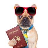 Dog passport Stock Images