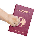 Dog passport Stock Photography