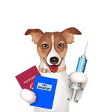 Dog with passport, vaccination certificate and syringe Royalty Free Stock Photo