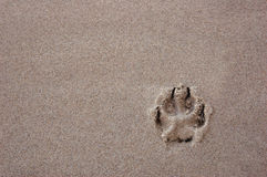 Dog paw. Print in the beach sand Stock Photos