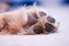 Dog paw Stock Image