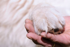 Dog paw Stock Images