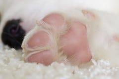 Dog paw close-up Stock Photography