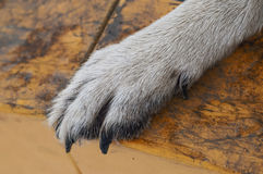 Dog paw Royalty Free Stock Images