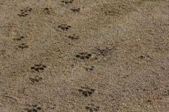 Dog paw footprint close up Royalty Free Stock Photos