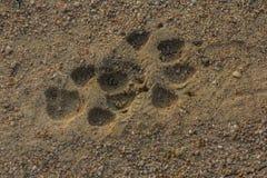 Dog paw footprint close up Royalty Free Stock Photo
