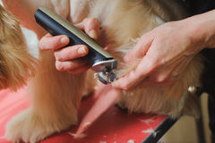 Dog paw grooming Royalty Free Stock Photo