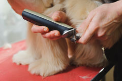 Dog paw grooming Royalty Free Stock Photography