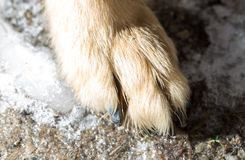 Dog paw on the ground. In the park in nature Stock Photography