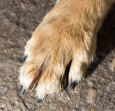 Dog paw on the ground. In the park in nature Stock Images