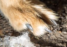 Dog paw on the ground. In the park in nature Stock Photo