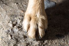 Dog paw on the ground. Photos in the studio Stock Photo