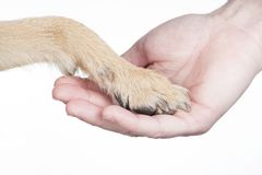 Dog paw and hand. Dog paw touching hand on white background Royalty Free Stock Photography