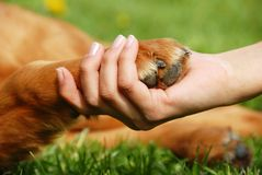 Dog paw and hand shaking royalty free stock image