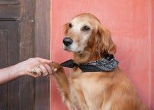 Dog paw Stock Images