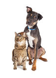 Dog With Paw on Head of Cat. Funny photo of large dog with paw up and resting on head of a cat Stock Photos
