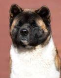 Dog paw and human hand Royalty Free Stock Image