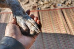 Dog paw and human hand stock photo