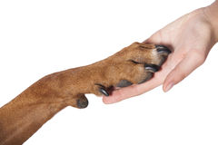 Dog paw and human hand Royalty Free Stock Photos