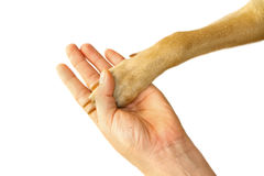 Dog paw and human hand handshake Royalty Free Stock Image