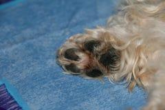 Dog paw Stock Image