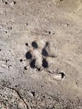 Paw imprint. A dog paw imprint in the mud royalty free stock photo