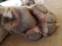 Dog paw Stock Photos