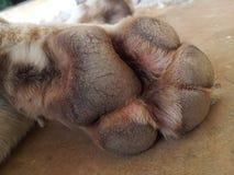 Dog paw. Isolated on ground floor Stock Photos