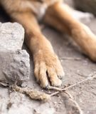 Dog paw. macro. In the park in nature Stock Photography