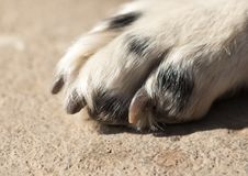 Dog paw. macro. In the park in nature Royalty Free Stock Image